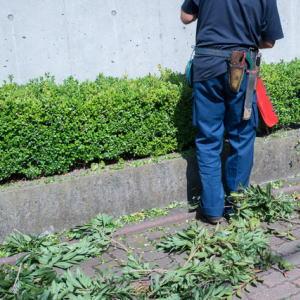 植木お庭のお手入れイメージ